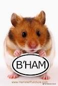 HamsterPuncture - Bellingham's Community Acupuncture Clinic